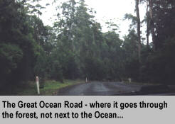 [The Great Ocean Road - where it goes through the forest, not next to the Ocean]