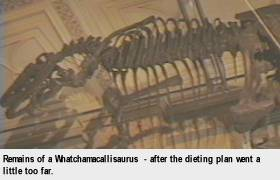 [Remains of a Whatchamacallisaurus - after the dieting plan went a little too far.]