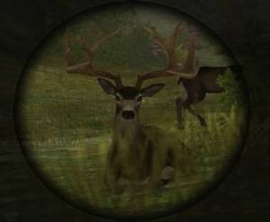 Deer in sight